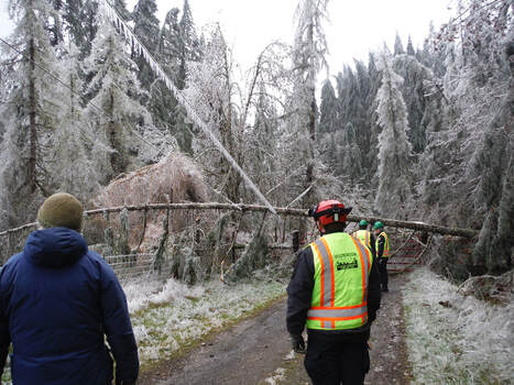 Rapid Response Team personnel survey a downed tree during the 2016 Ice Storm Response.